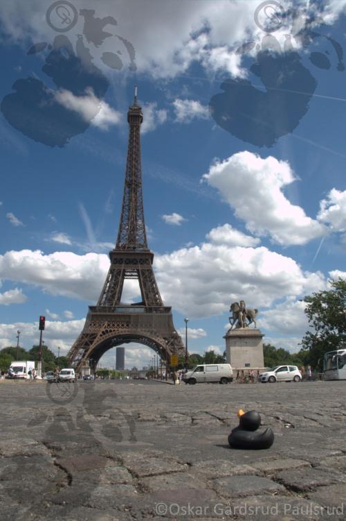 """Contest picture """"Duck in Paris"""""""